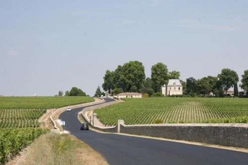 One of the many vineyards near Bordeaux